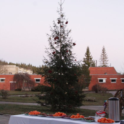 Ziemassvētku egles iedegšana
